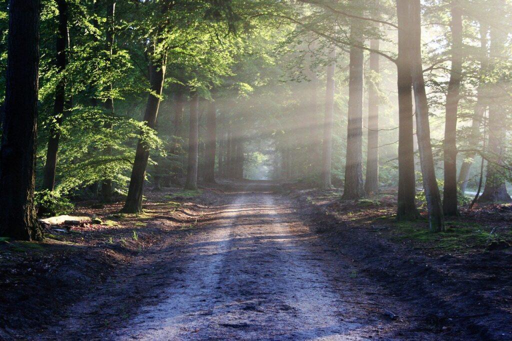 avenue, trees, path-815297.jpg
