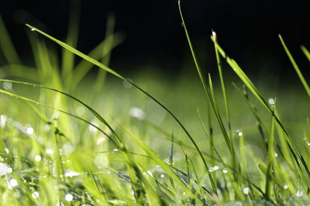grass, dewdrop, nature-6597188.jpg