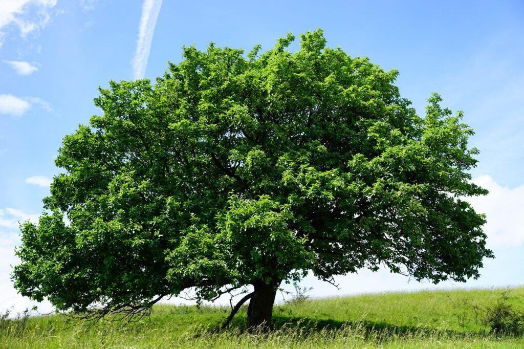 tree, single, randecker maar-1464727.jpg