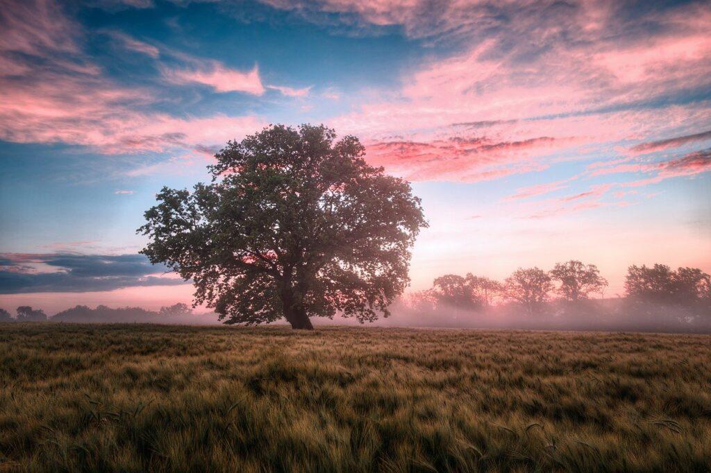field, morning, sunrise-6574455.jpg